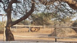 Djibouti blog4 3